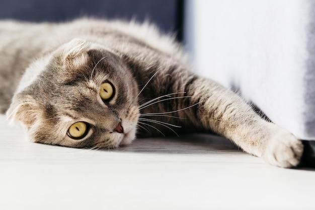 Gato descansando en el piso