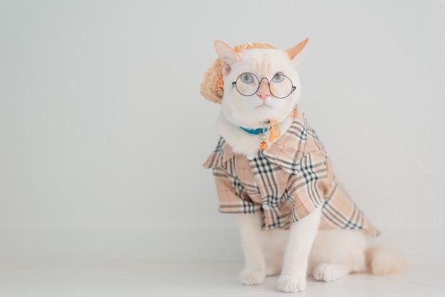 El gato divertido que se va de vacaciones, lleva la camisa y el sombrero de la playa en concepto del verano.