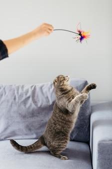 Gato divirtiéndose con juguete en el sofá