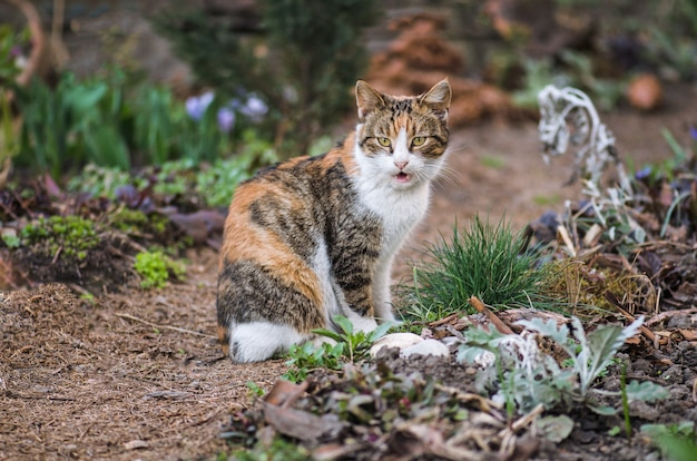 Gato doméstico adulto sentado en la hierba