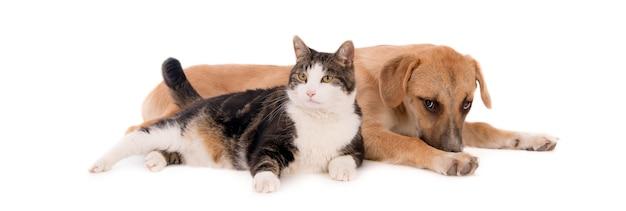 Gato doméstico gordito apoyado en un cachorro marrón acostado sobre una superficie blanca