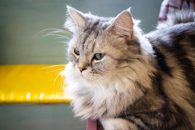Gato doméstico refrigerado en cafetería
