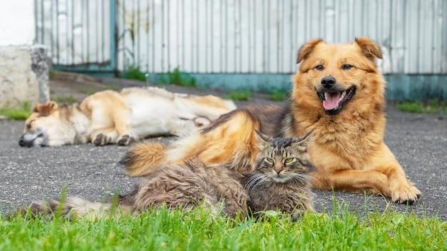 Un gato con dos perros tumbado pacíficamente en el jardín del callejón