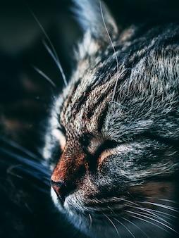 Gato durmiente épico con nariz roja.