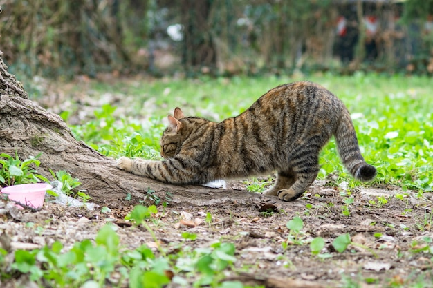 Gato ejecuta garras en el tronco.