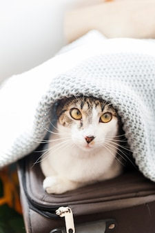 Gato en maleta debajo de la manta