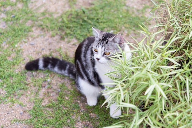 Un gato encantador con un árbol de bambú, thyrsostachys siamensis gamble, planta de medicina natural