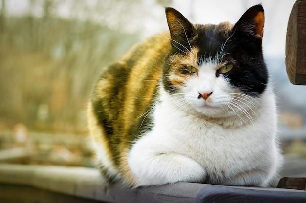Gato se encuentra en la calle, primer plano, vista frontal