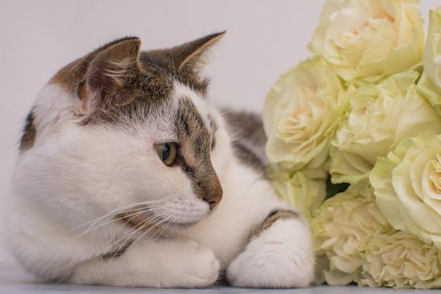 El gato se encuentra cerca de un ramo de rosas claras.