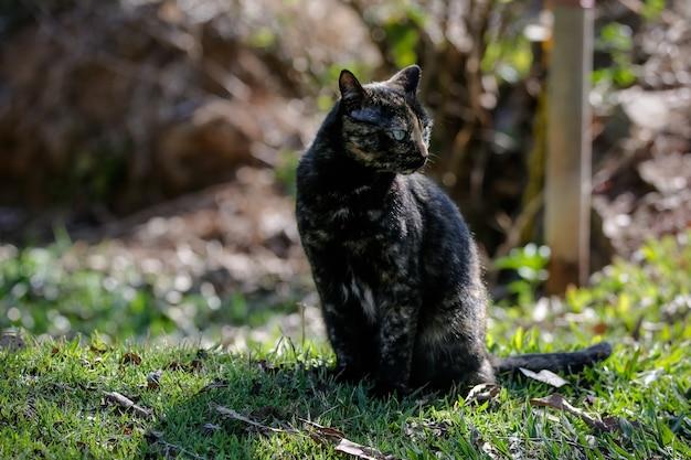 El gato escamoso tiene un pelaje de color negro y naranja, por lo que también se le puede conocer como el gato tortuga.