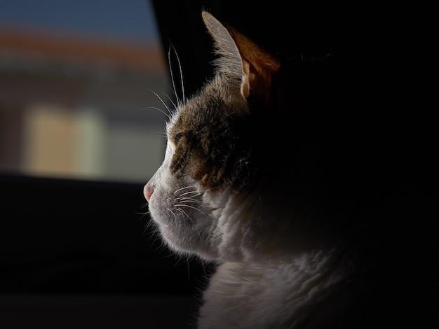 Gato esponjoso con ojos verdes