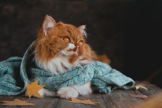Gato esponjoso se sienta en una mesa de madera rodeada de hojas secas de otoño.