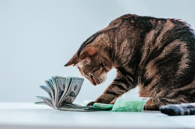 Gato en un fajo de dinero. concepto de donación de animales