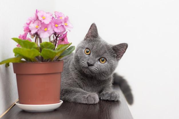 Gato y flor casera en una maceta