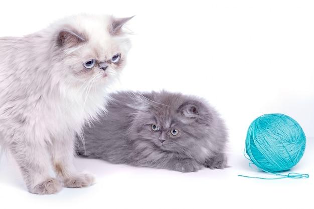 Gato y gatito