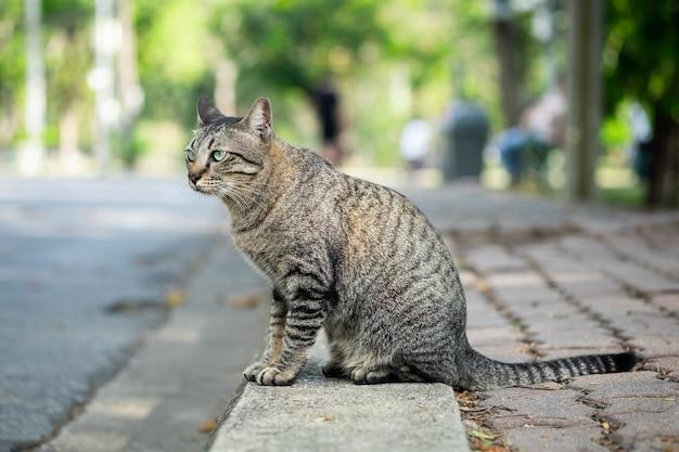 Gato de gato atigrado que mira algo en hierba en el jardín.
