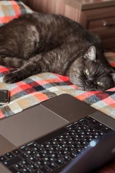 Gato gracioso finge usar laptop