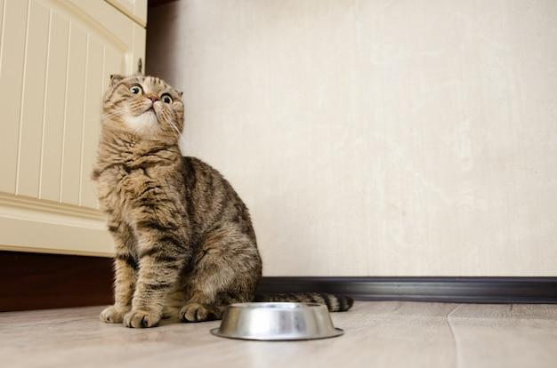 Gato gracioso hambriento esperando comida