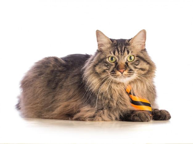 Gato grande noruego con corbata amarilla