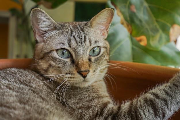 Un gato gris acostado en el baño, mirando a la distancia.