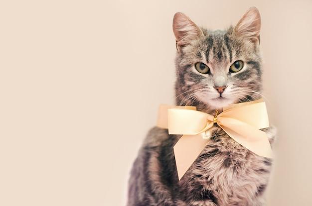 Gato gris con un arco sobre un fondo gris
