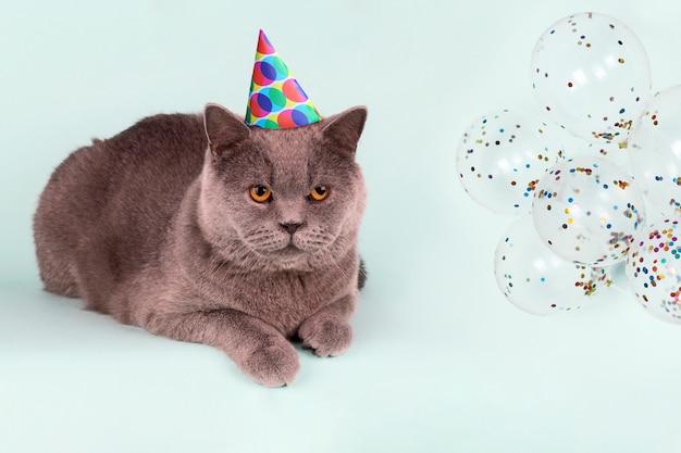 Gato gris británico en sombrero de fiesta de lunares y globos sobre fondo azul claro.