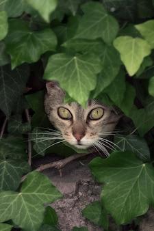 Gato gris escondido a través de hojas verdes