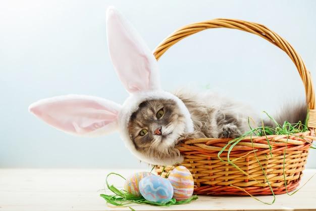 Gato gris esponjoso con orejas de conejo en canasta de pascua con huevos de pascua