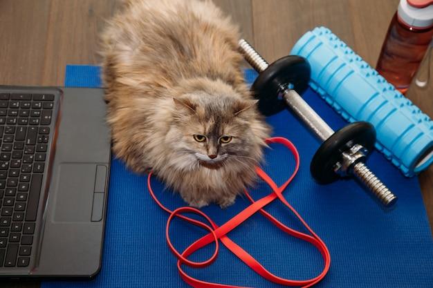 Gato gris gordo con una pesa en la colchoneta deportiva. concepto deportivo