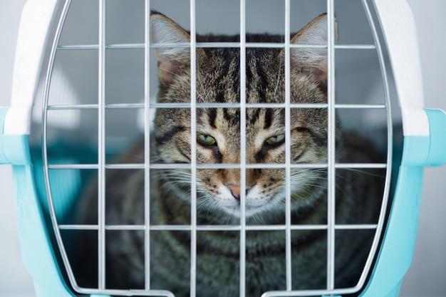 Gato gris en una jaula para transporte