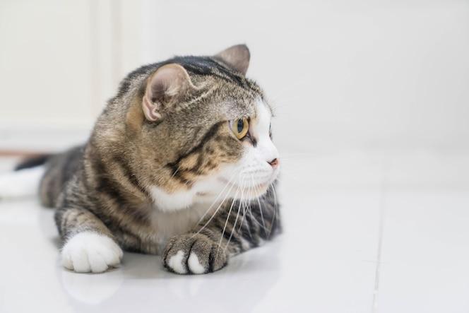 Gato gris lindo