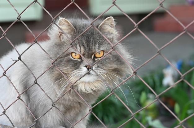 Gato gris con ojos amarillos encerrados
