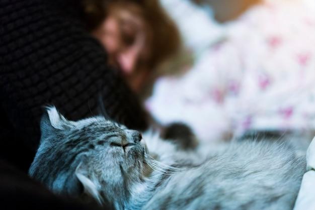 Gato gris que duerme con la mujer en cama en casa. concepto acogedor