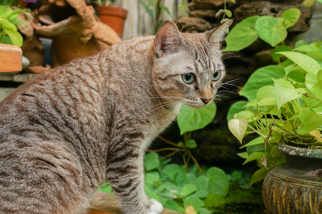 El gato gris está sentado y mirando al exterior se ve muy lindo.