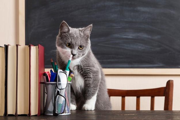 Gato gris se sienta en una mesa con libros y cuadernos, estudiando en casa.
