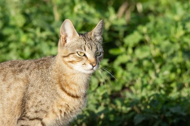Gato gris sobre hierba