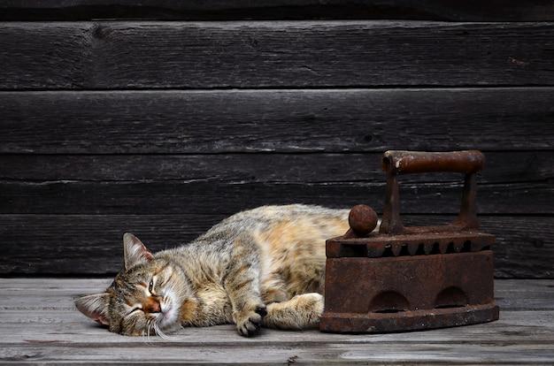 Un gato grueso está ubicado junto a un hierro de carbón viejo, pesado y oxidado, sobre una superficie de madera