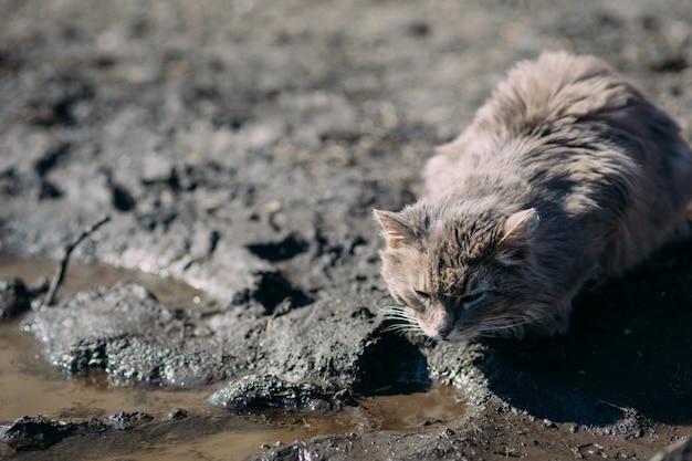 Gato sin hogar salvaje solo que mira alrededor y que se sienta en el viejo umbral de madera abandonado del edificio.