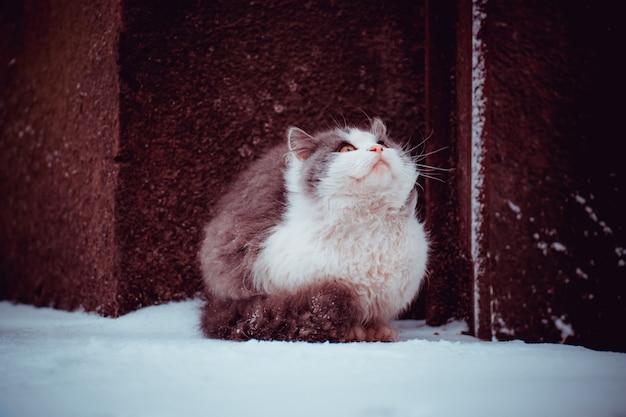 Gato joven en la nieve en el invierno