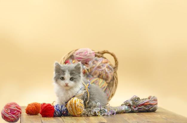 Gato jugando con bolas de lana.
