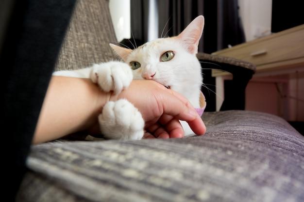 El gato está jugando con humanos mordiendo.