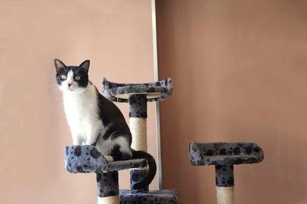 Gato en un juguete playhouse