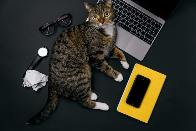 Gato juguetón divertido que miente en el escritorio de oficina. vista superior del escritorio de oficina negro con laptop, notebook, bolas de papel arrugado y suministros.
