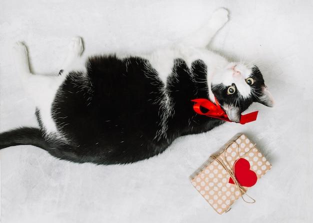 Gato con lazo cerca de caja actual y adorno de corazón.