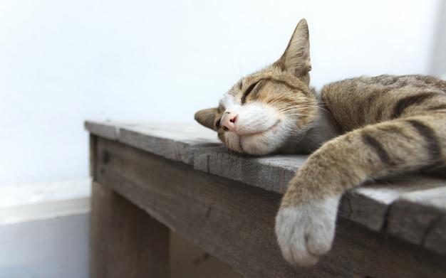 El gato lindo está durmiendo en la tabla de madera