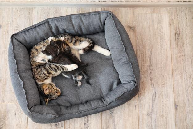 Gato con lindos gatitos en la cama del animal doméstico