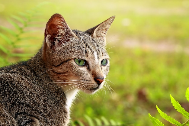Gato macho en el jardín