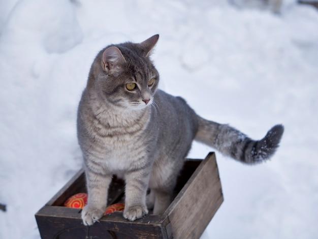 Gato mágico con bola roja de navidad en la nieve
