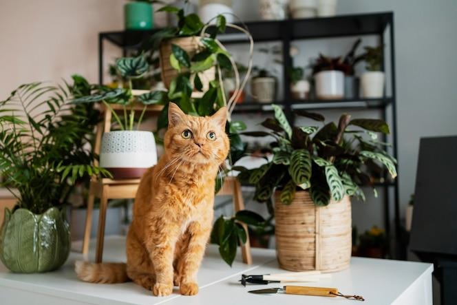 Gato en mesa con plantas alrededor.
