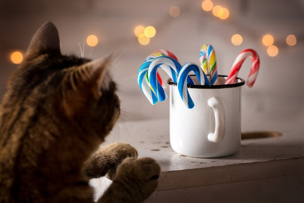 Gato mirando bastones de caramelo